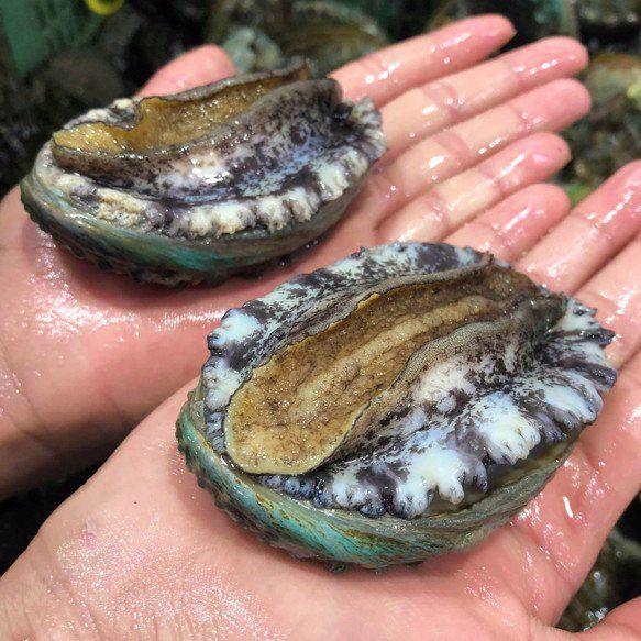 Bào ngư size to, thịt dày, đảm bảo 100% về chất lượng